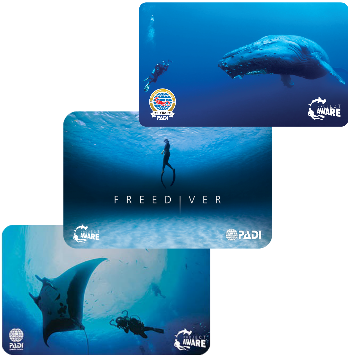 2016 cards -whale-freediver-manta
